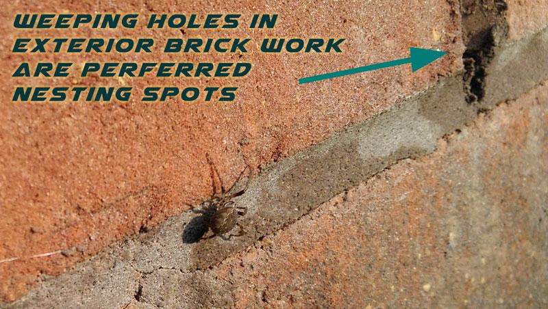 Spider near nesting exterior hole