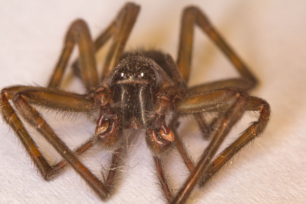 Dead Spider Exterminated in Mississauga