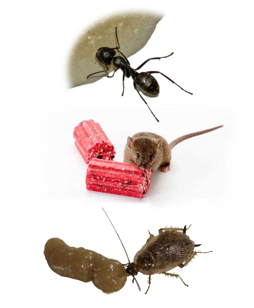 A Bait Example Mice and Cockroach