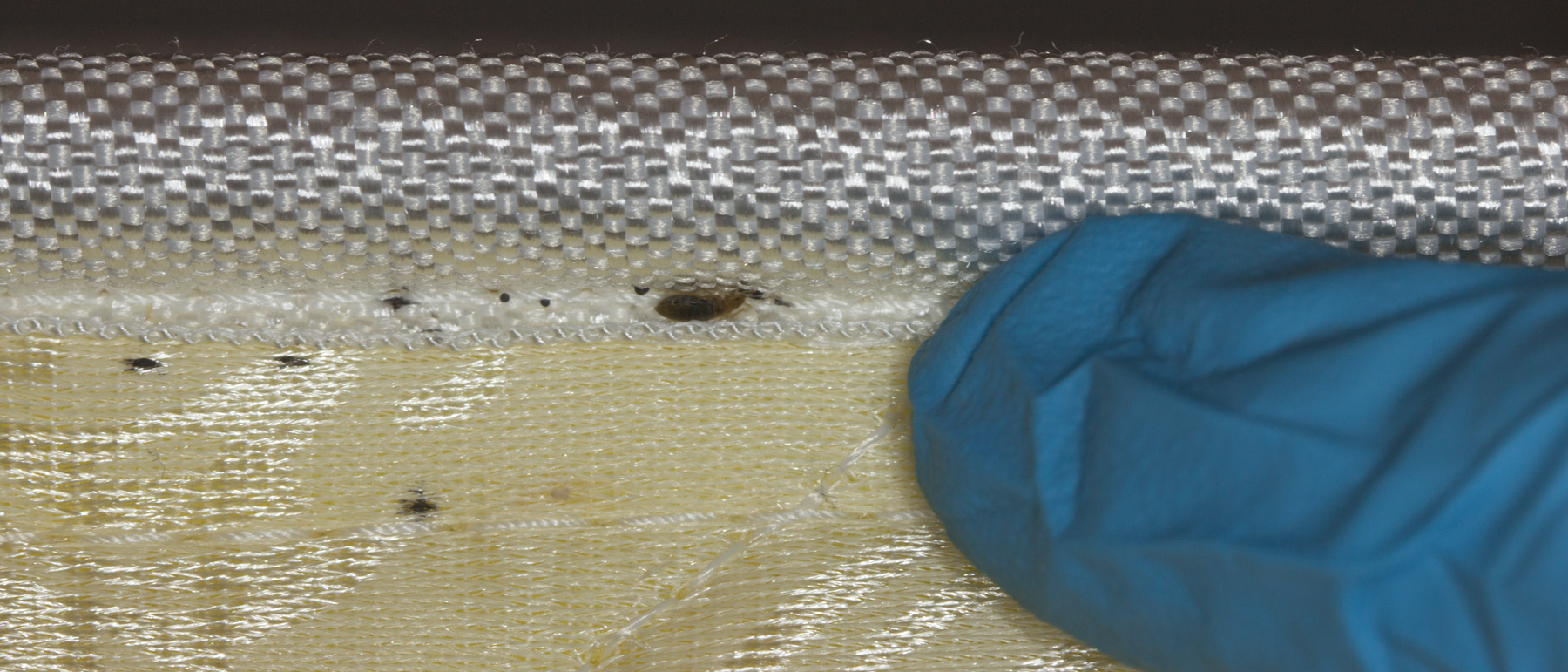Bed Bug and Excrements Mattress Piping